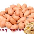 Kacang Tanah, Kandungan Dan Manfaatnya Untuk Merpati