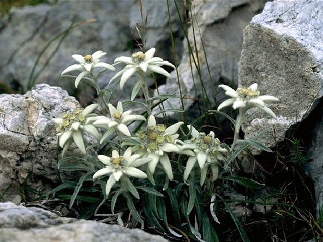 Que ver y hacer en los Alpes Dolomitas