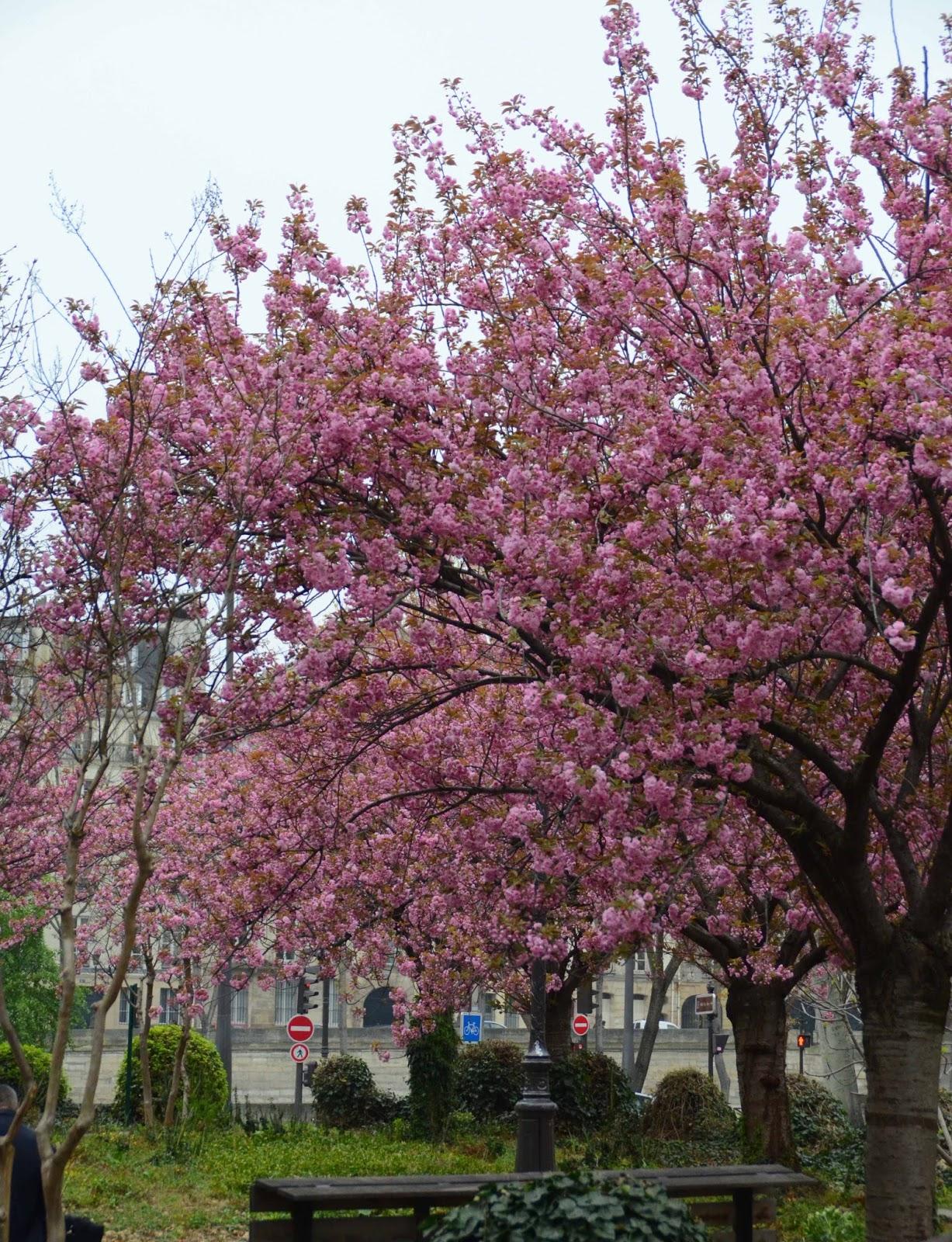 Paris and beyond jardin marie trintignant for Jardin paris
