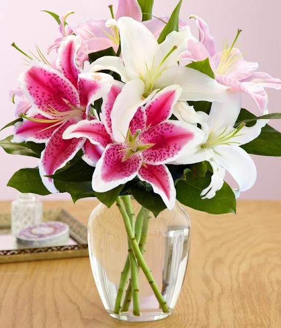 hoa li tặng bạn gái