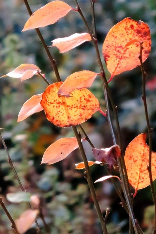 Novembersonne, Natur, Herbst, Fotogrfie
