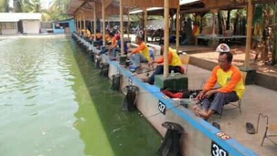 umpan ikan mas air hijau