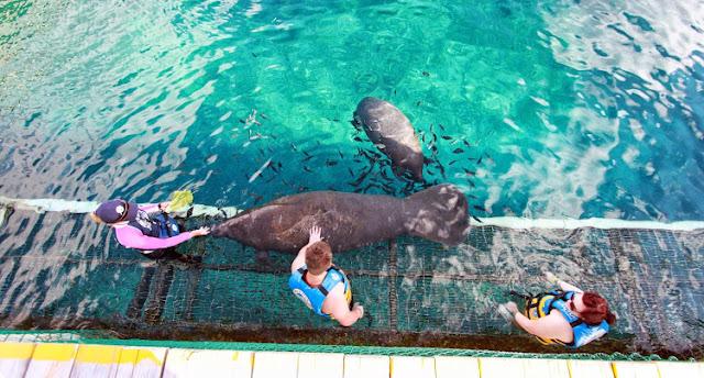 Nado com os Leões marinhos no Parque Chankanaab Beach Adventure Park