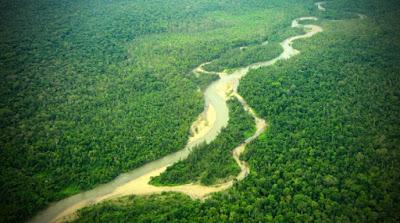 Hutan biogeografi jenis hutan - berbagaireviews.com