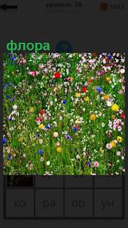 1100 слов на поляне растет разноцветная флора 36 уровень
