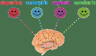 Ο εγκέφαλος απελευθερώνει χημικά