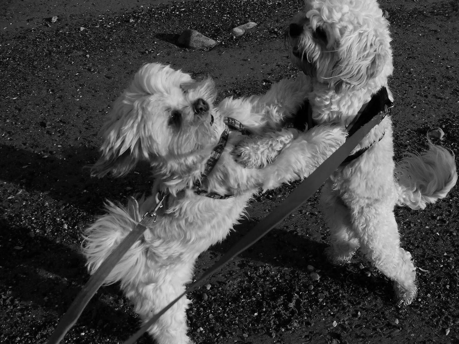 Seaham Beach Dog Ban