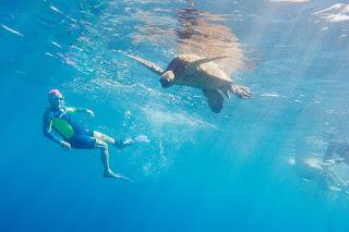 http://www.tropicallight.com/swim1/31mar19sm/31mar19sm.html