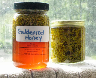 Goldenrod Recipes and Remedies - honey and tincture - from pixiespocket.com