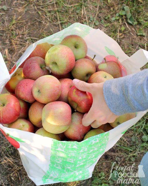 The whole family can pick their own apples at Triple B Farms in Monongahela, PA.