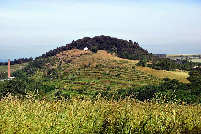 Die Weinlage Kloster Disibodenberg bei Odernheim an der Nahe