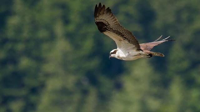كيف يطير الطير