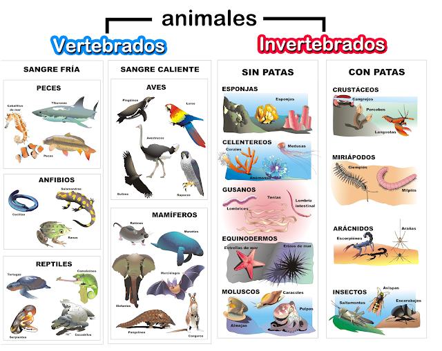 Resultado de imagen para animales vertebrados