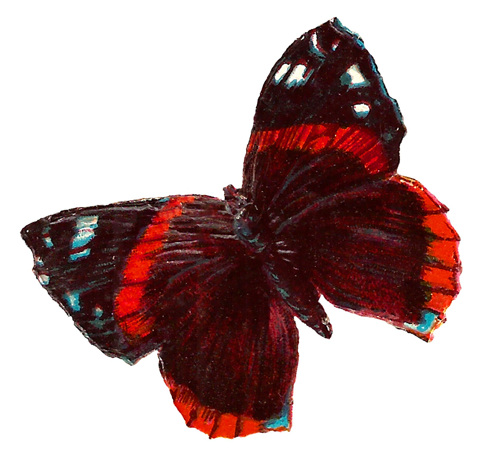 antique images red butterfly free images insect illustration