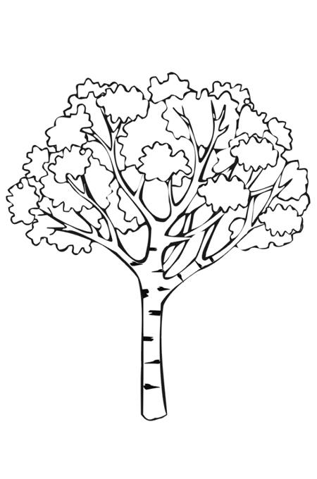 شجرة رسم مفرعة Feat