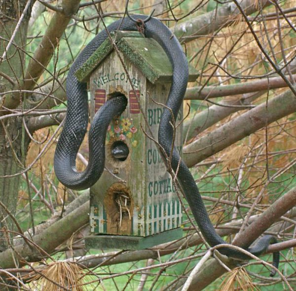 Put The Birdhouse In A Hard To Reach Location If You Have Any Cats Or Know  That Cats Come Into Your Garden. It Is Safe To Just Presume That You Should  Keep ...