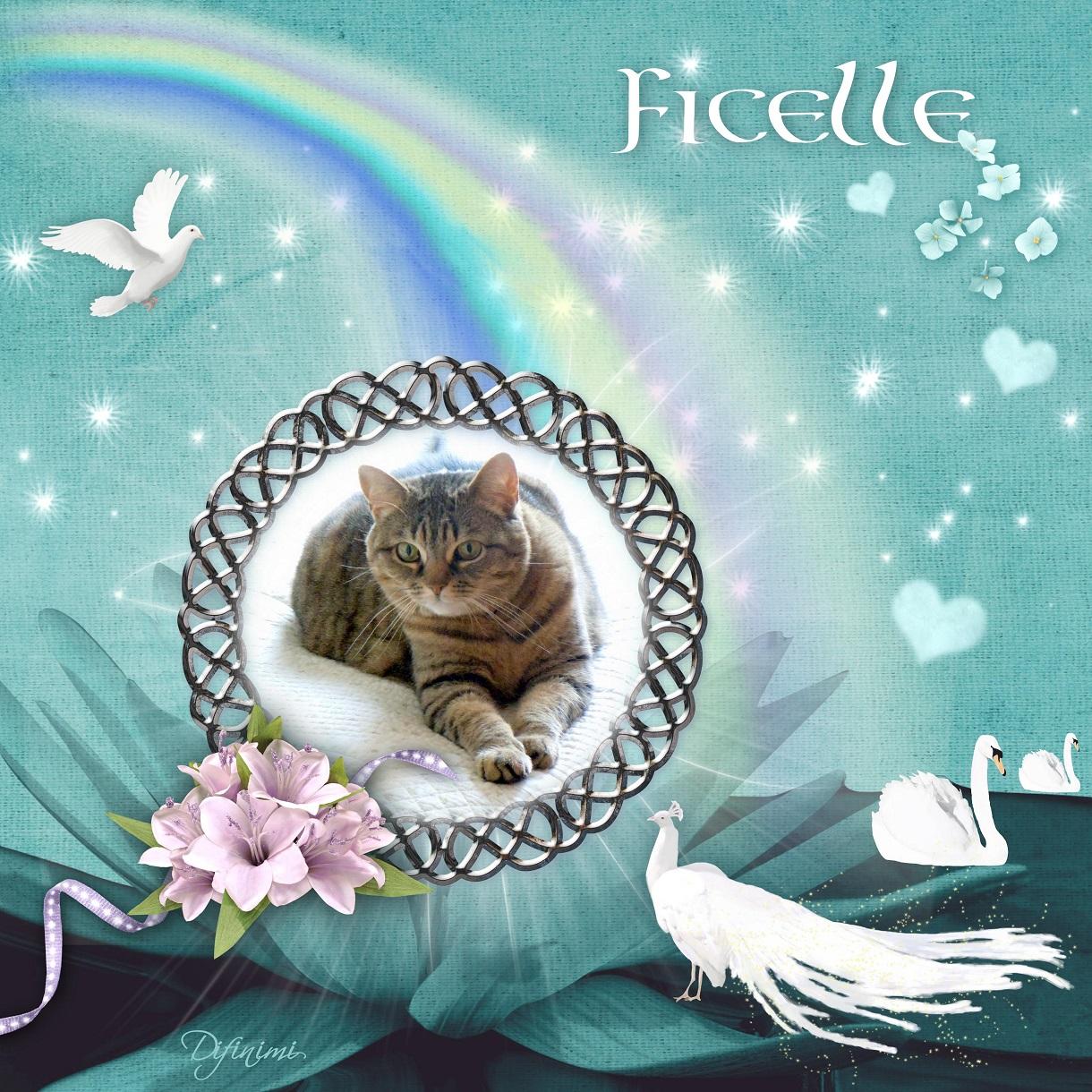 paradis chat Paradis du chien à wendake offre des services de toilettage et de coupe de  griffes pour chats et chiens nous sommes les spécialistes du chat.