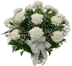 Beyaz Karanfil