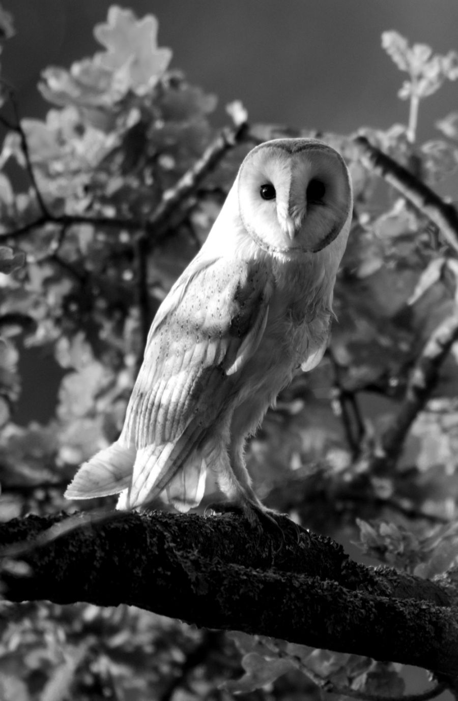 Wildlife photography black and white wallpapers emoji
