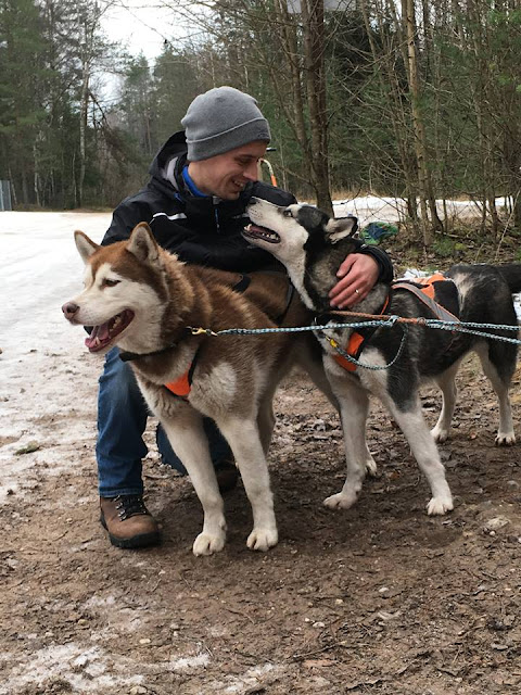 Dog Sledding Discover Latvia Tours Riga Latvia