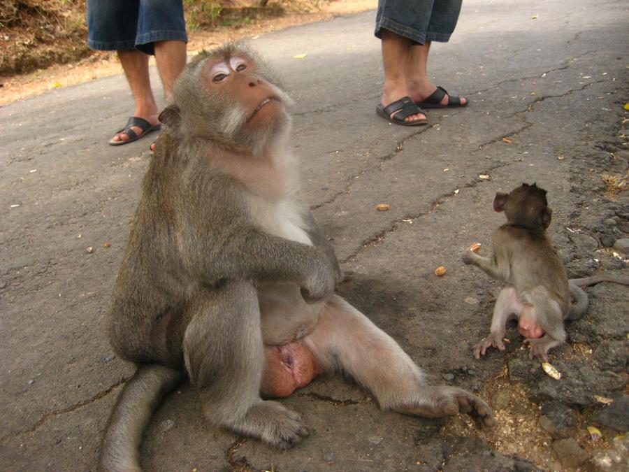 거만한 표정의 원숭이