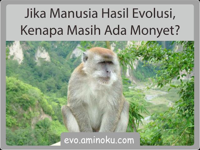 Jika manusia hasil evolusi, kenapa masih ada monyet?