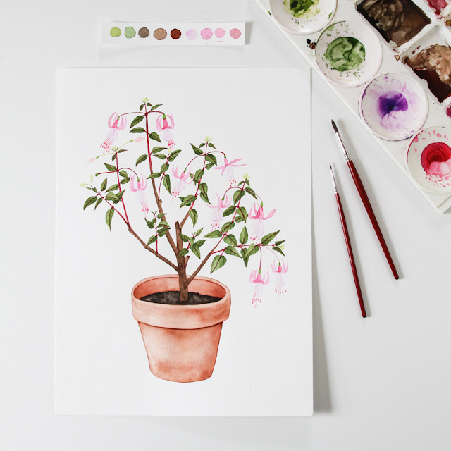 watercolor paintings, watercolor plant, watercolor fuchsia, clay pot, houseplants, Anne Butera, My Giant Strawberry