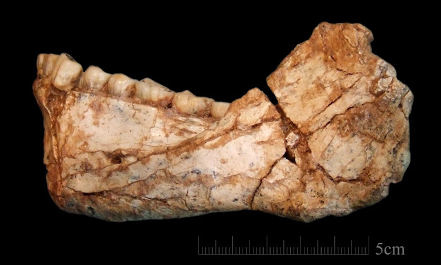 Moroccan fossils show Human ancestors' diet of game