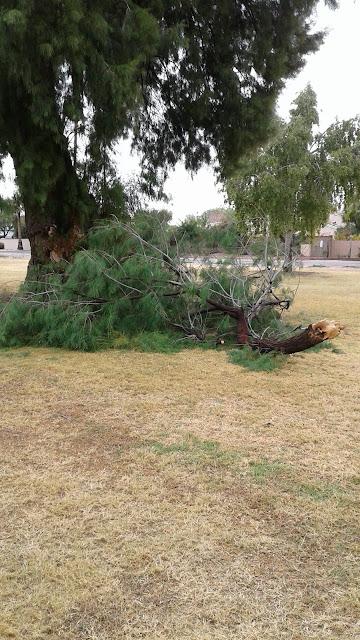 Broken Tree Limb at G.R. Herberger Park