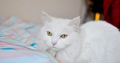 Inspirasi Nama Kucing Lucu Jepang Yang Paling Populer