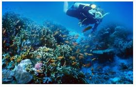 Singgasana Hotels & Resorts Scuba Diving Bagi Pemula , June, 03 2014