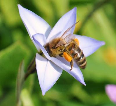 Πωλείται μέλι, γύρη και βασιλικός πολτός στην Άρτα