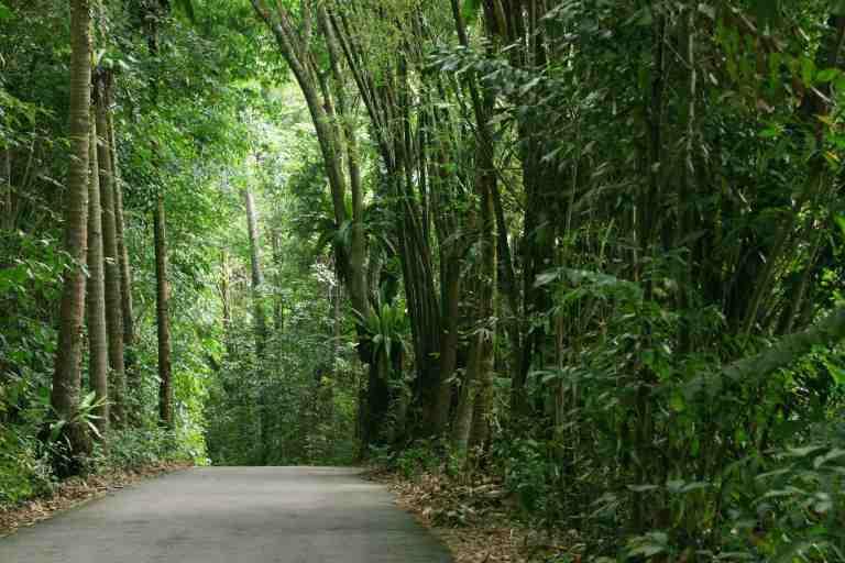 Palau Ubin, the Unfathomable Green Shelters of Singapore