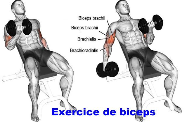 exercice de biceps