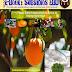 e-Book Subsídios EBD – edição 7