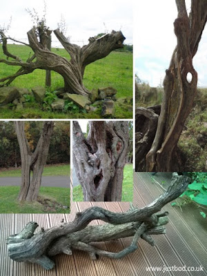 Some of the sculptural shapes of hawthorn