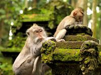 Monkey Forest, Cagar Alam Terindah yang Ada di Bali