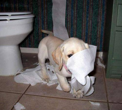 Funny pets behaving badly 13
