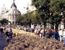 Fiesta de la Trashumancia 2016 por el centro de Madrid. Del 21 al 23 de octubre