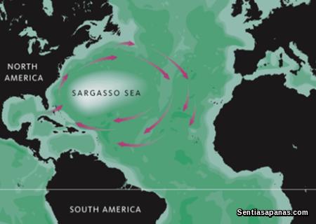 Laut Sargasso