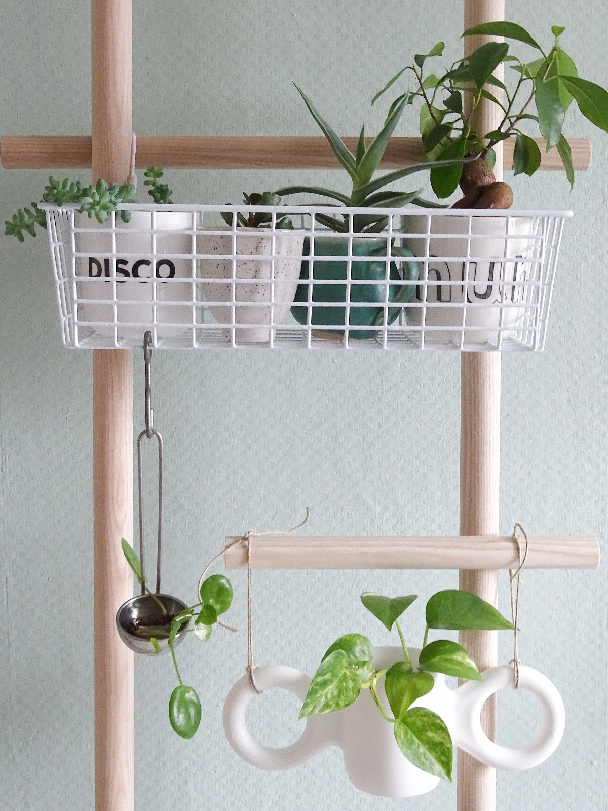 4 alternative Ideen zum Aufhängen deiner Pflanzen mit Haushaltsgegenständen - http://mammilade.blogspot.de