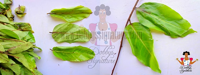Indigenous leafy vegetables and herbs found in Nigeria – Dobby's