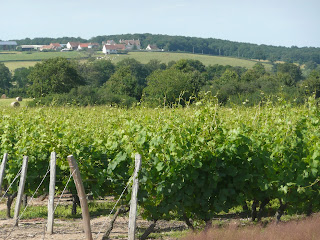 photo des vignes