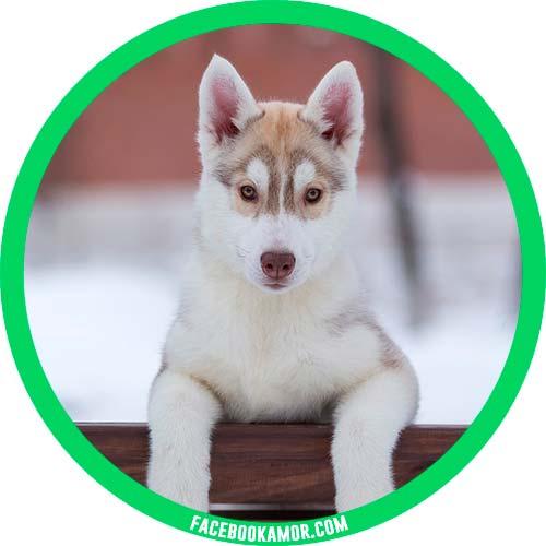 postales de perrito para perfil