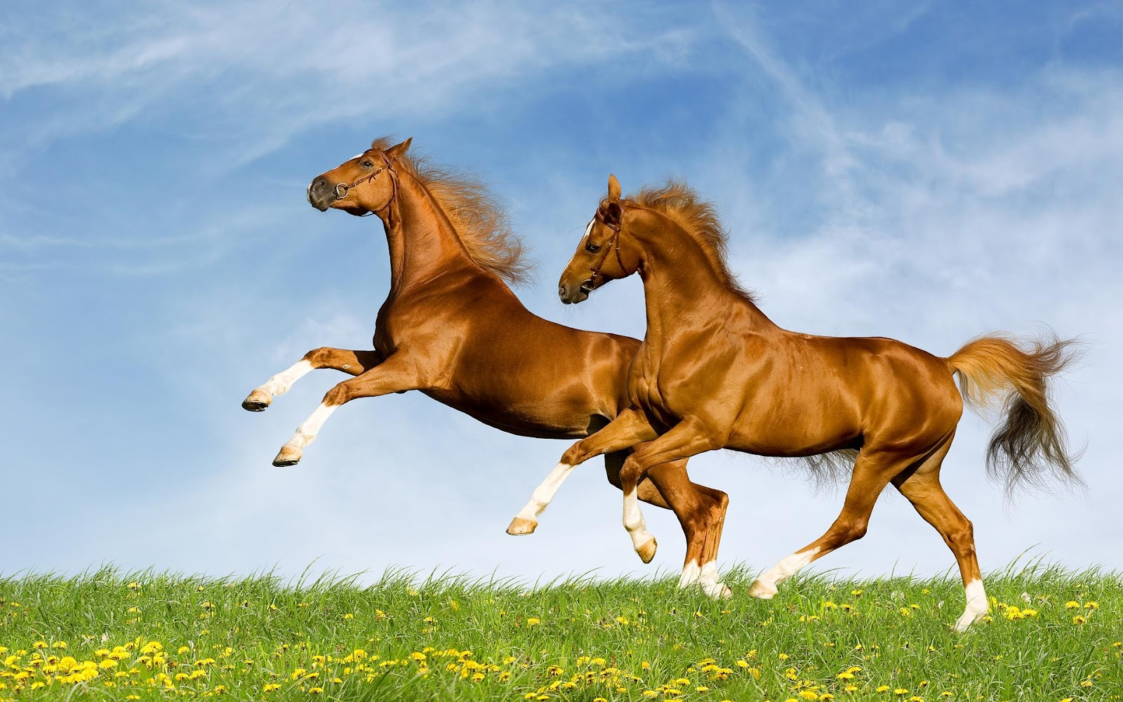 Actresses Hd Wallpapers Horse Hd Wallpapers-5707