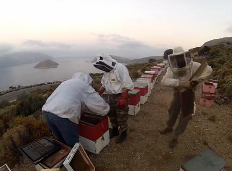 Επιτέλους καλά νέα: Ενέργειες για να γίνει ΠΟΠ το θυμαρίσιο μέλι της Καλύμνου