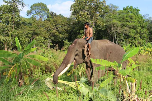 Bak Maï finalement dans le Ratanakiri