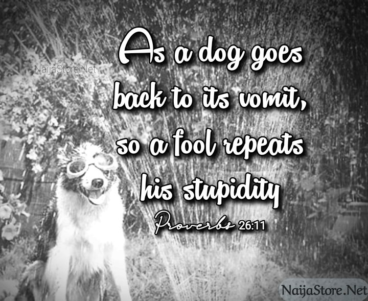 Proverbial Quotes: As a dog goes back to its vomit, so a fool repeats his stupidity - Proverbs 26:11
