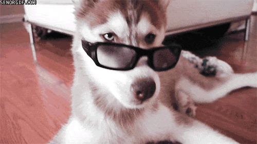 Husky Frases: Pé De Meia: Husky Siberiano