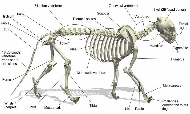 Cat Chit Chat Cat Anatomy